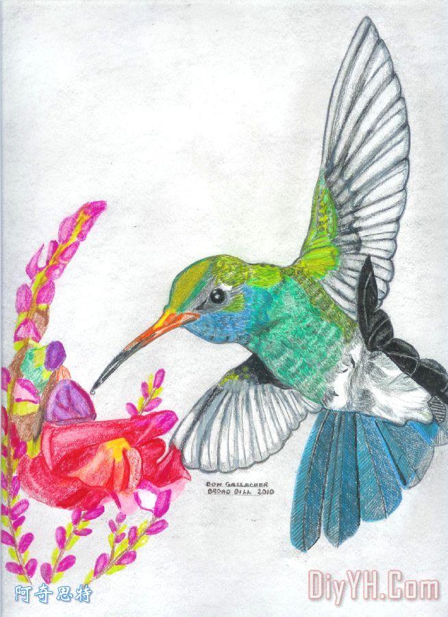 蜂鸟喜悦装饰画_花卉_动物_自然_宠物_蜂鸟喜悦油画