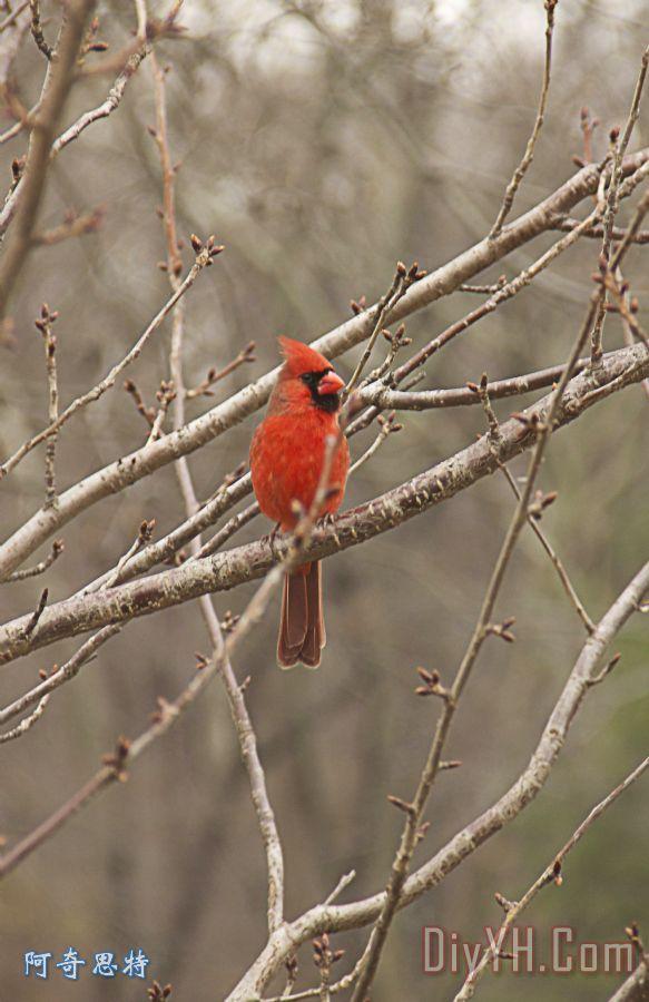 壁纸 动物 鸟 鸟类 雀 583_900 竖版 竖屏 手机