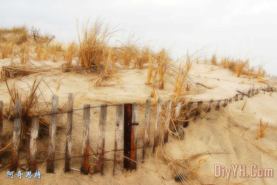 冬季沙丘 - 泽西海滩装饰画_风景_新泽西州_泽西肖尔