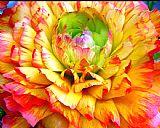 花瓣突发装饰画