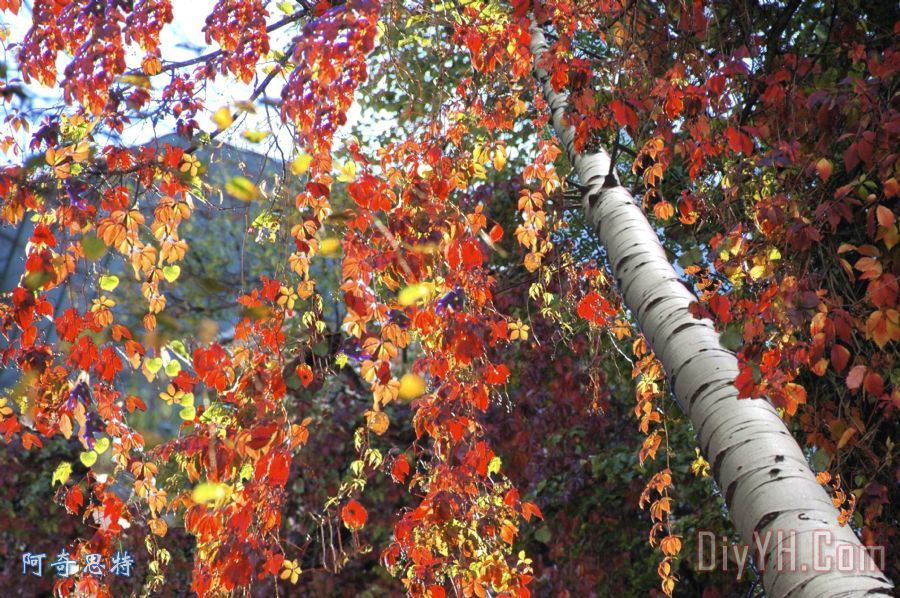 只是一棵树装饰画_风景_夏洛滕堡_只是一棵树油画定制