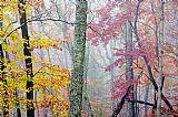 森林公园秋色田园风格油画