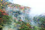 秋天多彩的树林装饰画