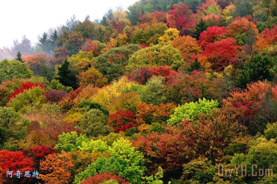 山坡帆布秋季色彩装饰画_风景_秋天_秋天的颜色_山坡
