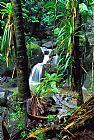 瀑布 - 丛林瀑布