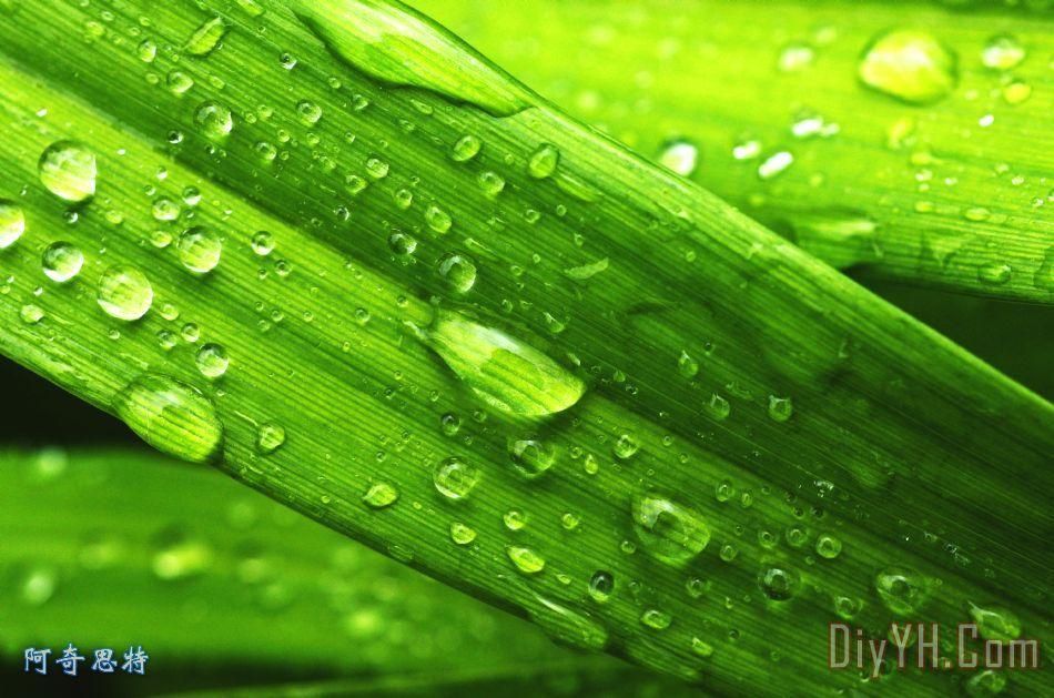 春天的雨滴装饰画_风景