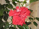 日本玫瑰装饰画