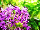 紫色的花朵装饰画