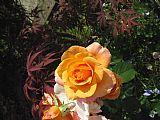 玫瑰2装饰画