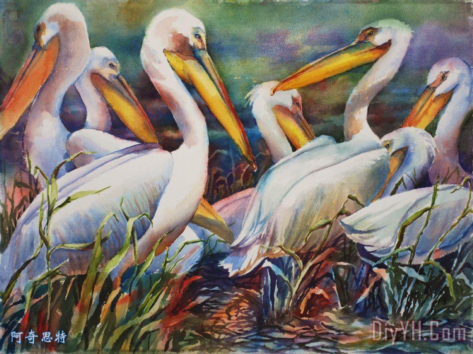 白鹈鹕装饰画_动物_鸟类