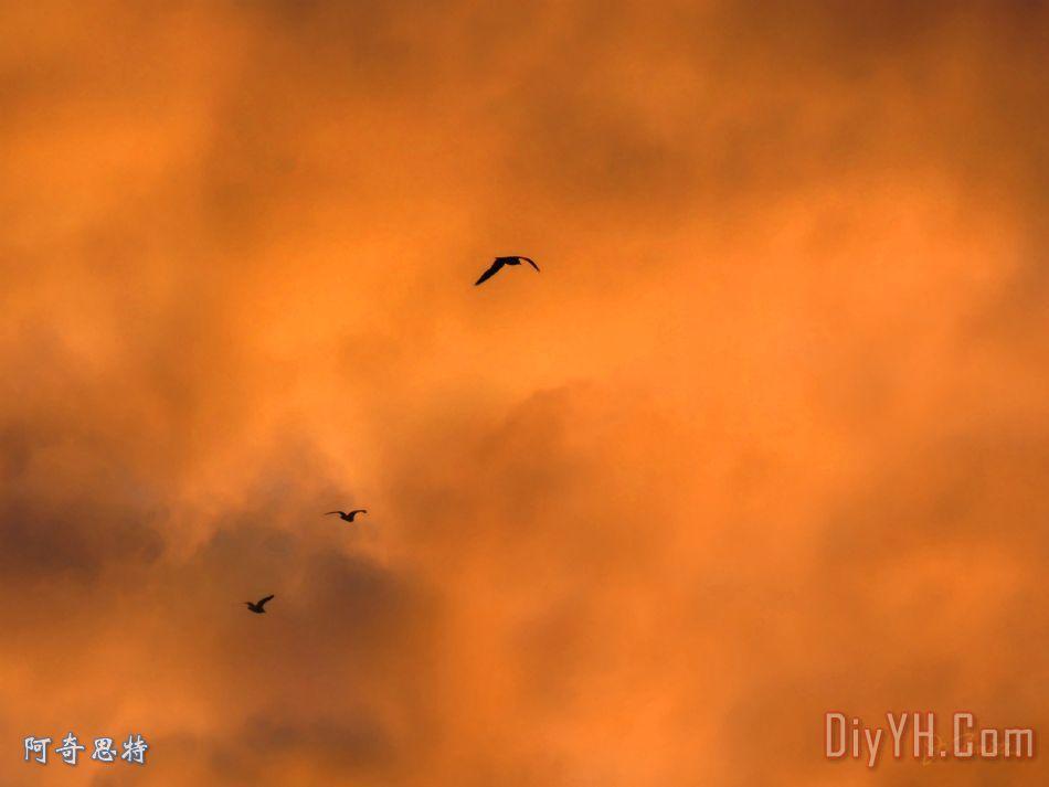 海鸥在日落装饰画_风景_晚霞_轮廓_傍晚_海鸥在日落