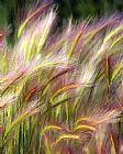 草丛装饰画