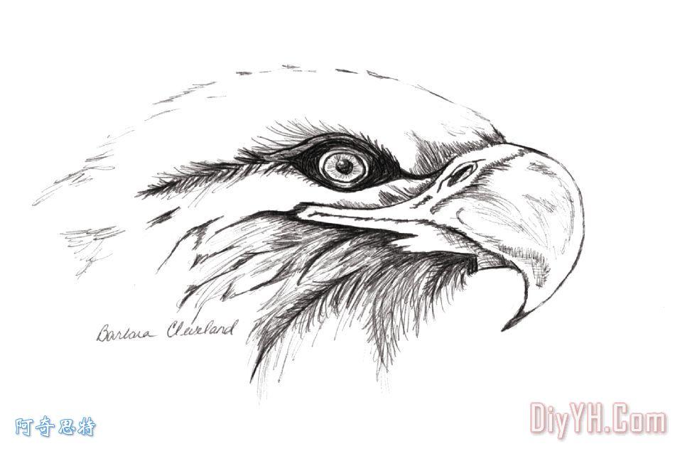 老鹰手绘图案大全