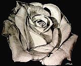 黑色玫瑰静物装饰画
