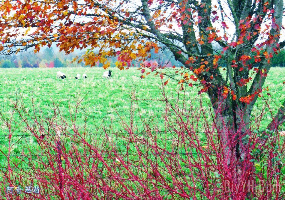 秋天的颜色装饰画_风景_动物_树木_绵羊_秋天的颜色