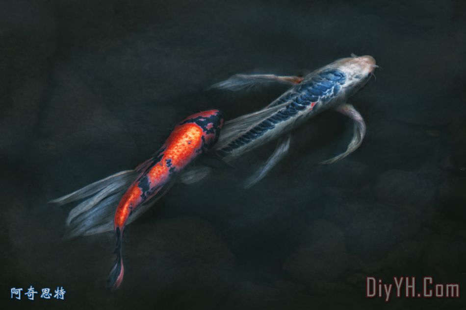 壁纸 动物 鱼 鱼类 950