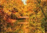 秋季桥大自然的最好装饰画