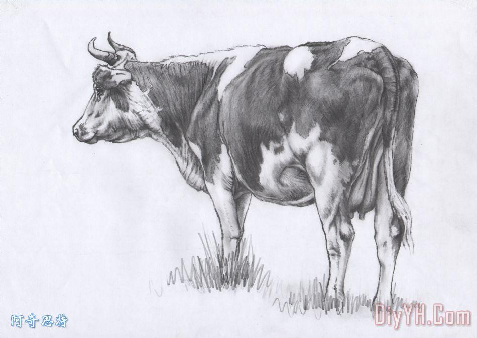 落后的牛素描 - 落后的牛素描装饰画