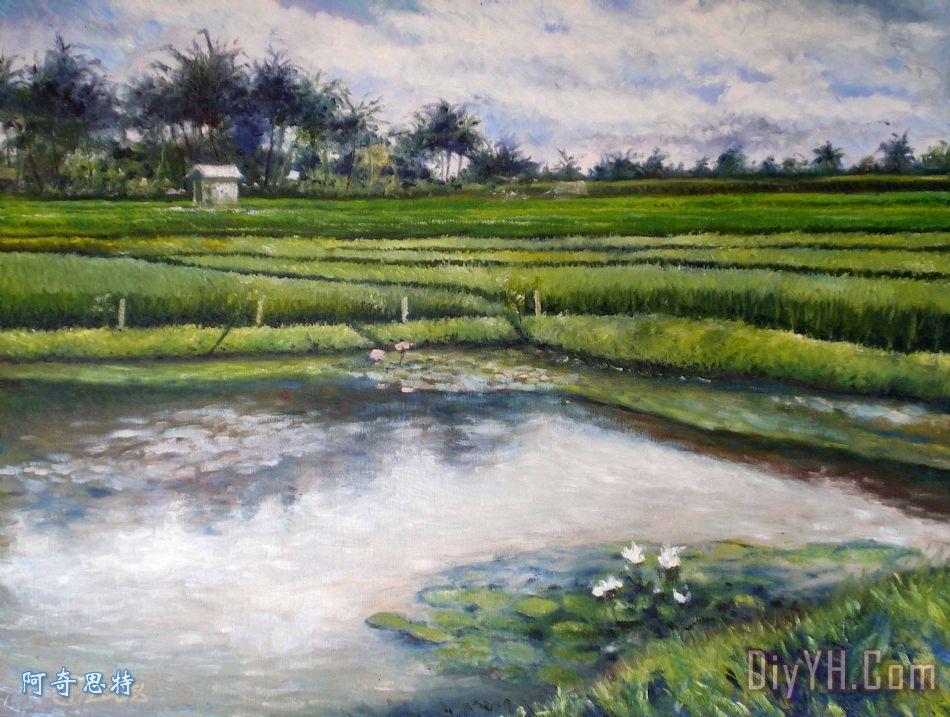 荷花和稻田乌布印度尼西亚巴厘岛2008