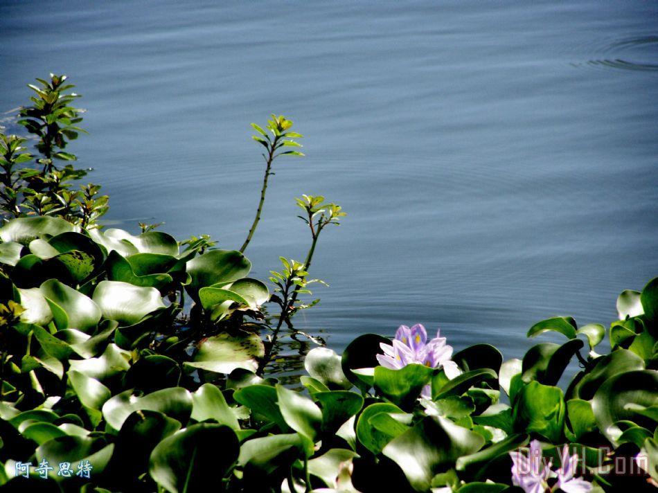 树叶画边-画 花卉 水 叶子 礼来公司的池塘边油画定制 阿奇思特