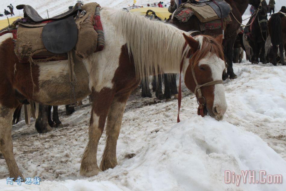 马吃雪装饰画_动物_雪花