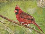 红色红色在树装饰画