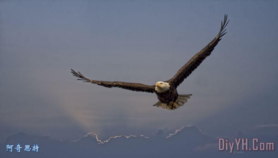 强度的鹰装饰画_动物_自然