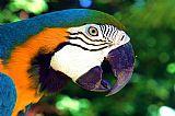 鹦鹉2装饰画
