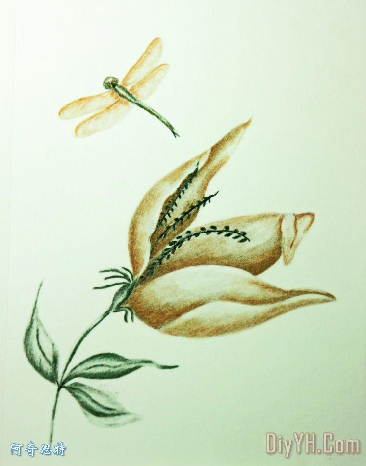 蜻蜓的画法铅笔画步骤