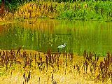 和平鹭湖上装饰画