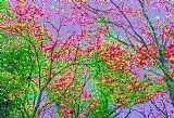 树木在自然装饰画