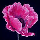 - 粉红色的罂粟