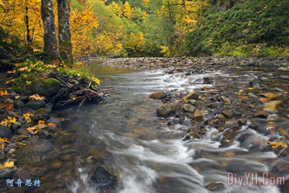 秋天小河树叶小动物图片大全