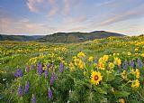 春季草甸美式田园风格油画