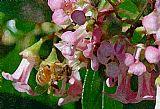花蜂装饰画