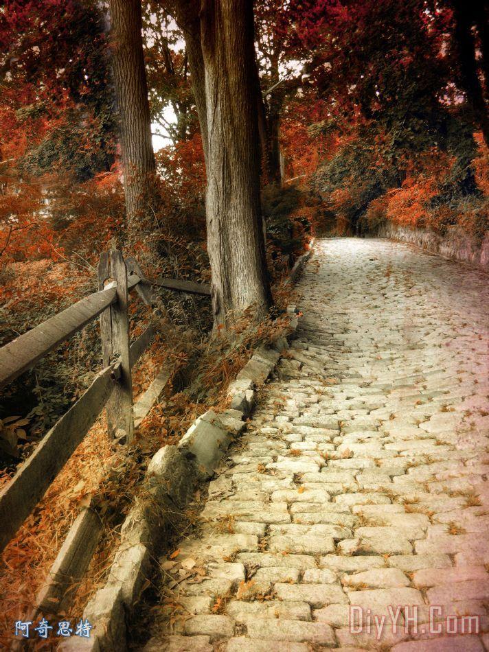 鹅卵石路装饰画_秋天_树木_街道_植物的叶子_鹅卵石路