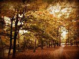 秋天的走廊装饰画