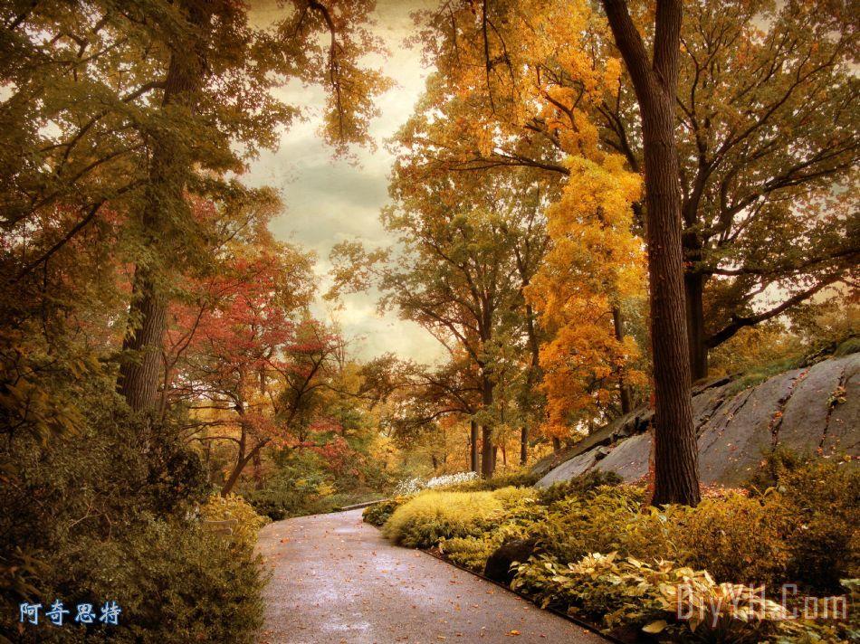 杜鹃花园在秋季装饰画_风景_秋天_树木_自然_植物的
