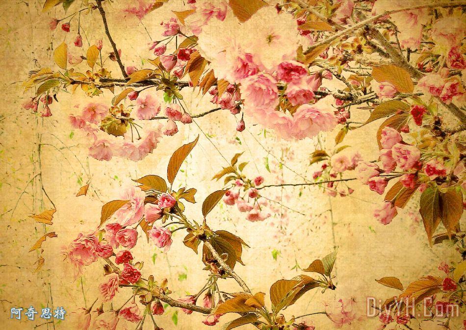 复古花 - 复古花装饰画