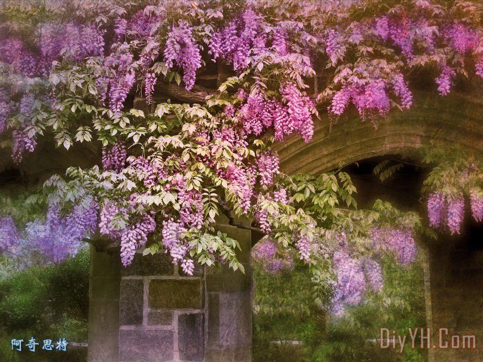 复古紫藤装饰画_风景_花卉_春天_花朵_紫色的_紫罗兰