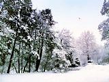 冬季印象装饰画