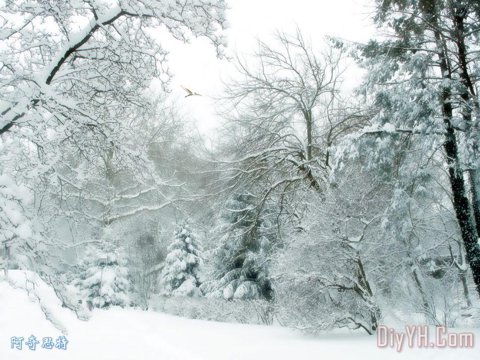 冬季护舒宝装饰画_风景_树木_季节_雪花_冬天_冬季