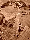 - 蕨类植物研究3褐色