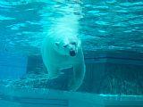 - 北极熊即将于你