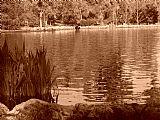 - 沙洛姆公园乌贼