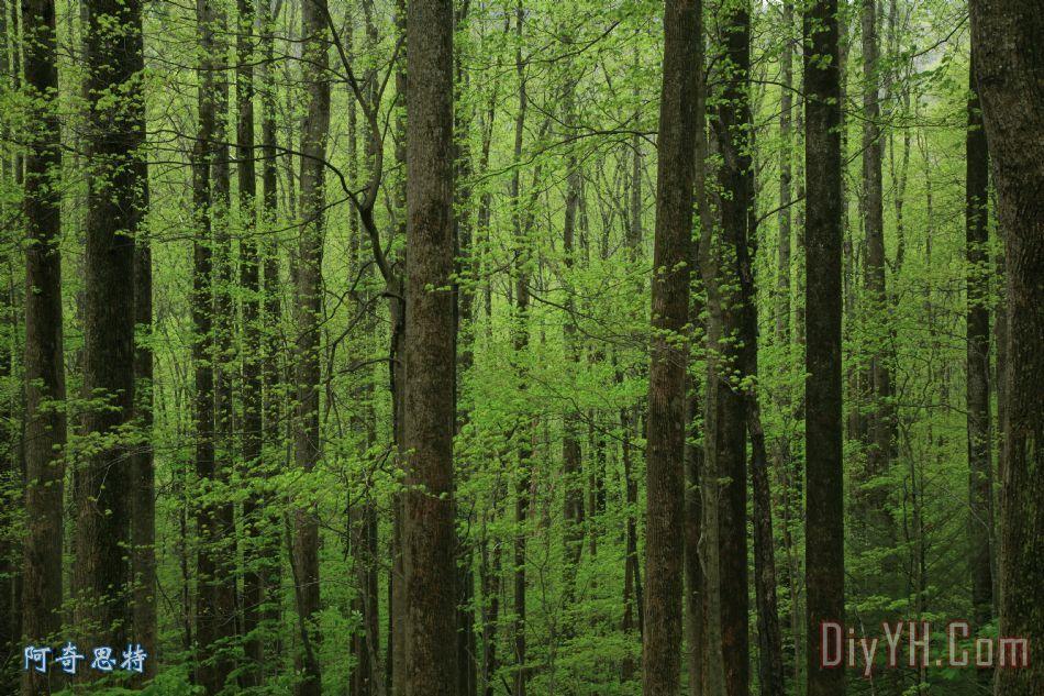 在春天的树木 在春天的树木装饰画