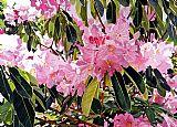 植物园杜鹃花卉装饰画