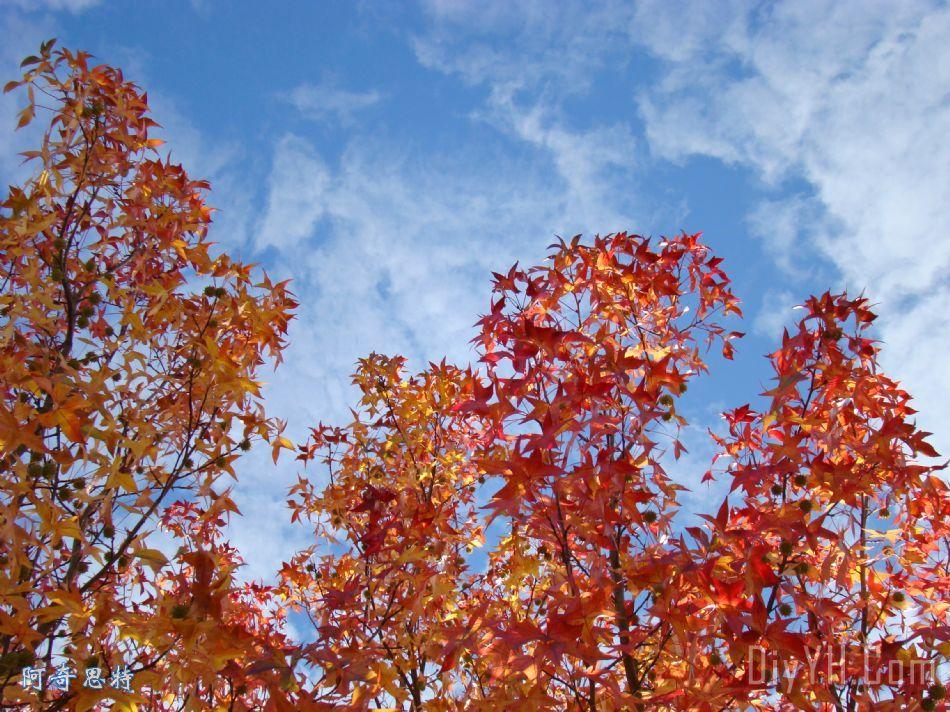 秋天的蓝天白云七彩虹秋天树叶装饰画_风景_叶子_鲜艳