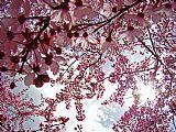 花艺术品春季花卉艺术版画办公电话装饰画