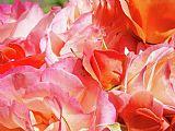 玫瑰花束插花艺术版画花园玫瑰Baslee特劳特曼装饰画